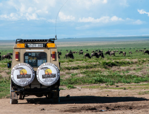 TANZANIA: The Great Migration
